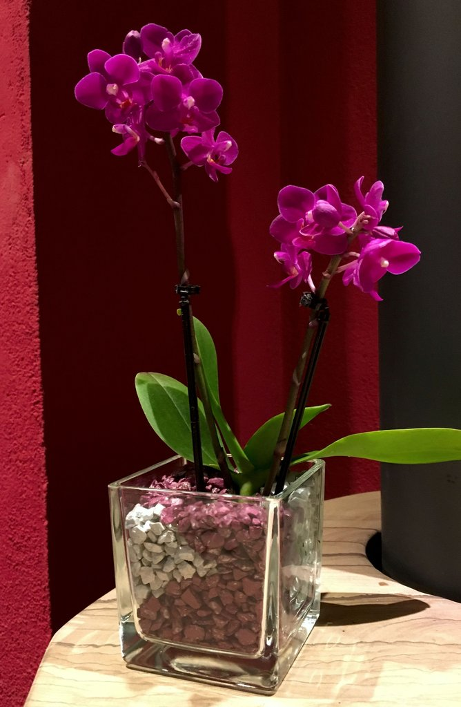 glastopf s eckig f r mini orchideen. Black Bedroom Furniture Sets. Home Design Ideas
